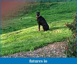 FIO members with Dog Avatars-446.jpg