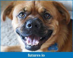 Pet Insurance-dsc03056-1.jpg