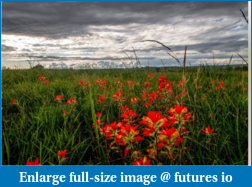 Click image for larger version  Name:Beautiful_Red_Flowers_on_a_stormy_day_2015-10-10_0936.png Views:39 Size:400.9 KB ID:206936