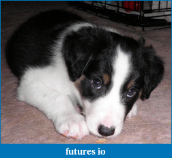 OK, you're daytrading. Do you have a dog ?-im-too-cute.png