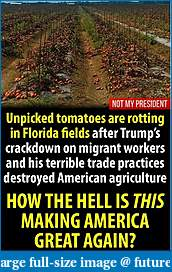 Click image for larger version  Name:CropsRottingInTheFields.jpg Views:108 Size:123.5 KB ID:251158