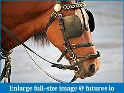 Click image for larger version  Name:Horse-Blinders.jpg Views:70 Size:78.1 KB ID:288761