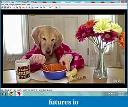 A Traders Diet (What do you eat?)-dog-eating1.jpg