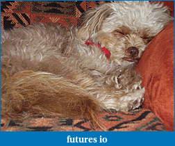 Dislocated, broken, swollen?-dog012.jpg