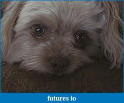 Dislocated, broken, swollen?-1-dog-002.jpg