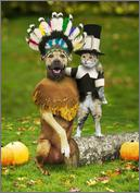 Very cute halloween animals in costume-cat-hat.bmp