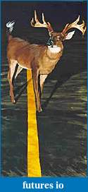 Click image for larger version  Name:deer headlights.jpg Views:37 Size:6.5 KB ID:56685