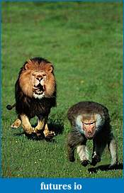 Trading related one-liners-lion-baboon-knuttz.jpg
