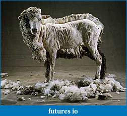 Click image for larger version  Name:_sheep1.jpg Views:29 Size:32.0 KB ID:79940
