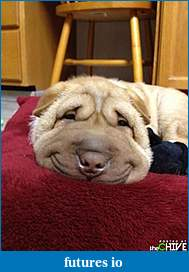 Click image for larger version  Name:awesome-dog-27.jpg Views:84 Size:42.1 KB ID:87213